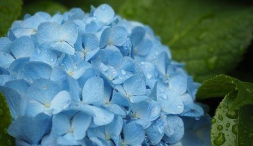 梅雨入り宣言されたらやっている2つのこと。少しでも快適に梅雨を過ごすために。