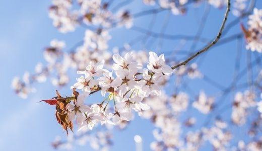 『桜のような僕の恋人 宇山佳佑著』通勤、通学中は絶対に読まないでください。