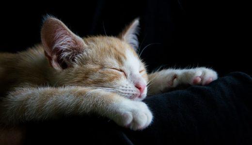 眠れない人必見!ウルトラ寝つきが悪い私でも眠れるようになった2つの習慣を紹介します。